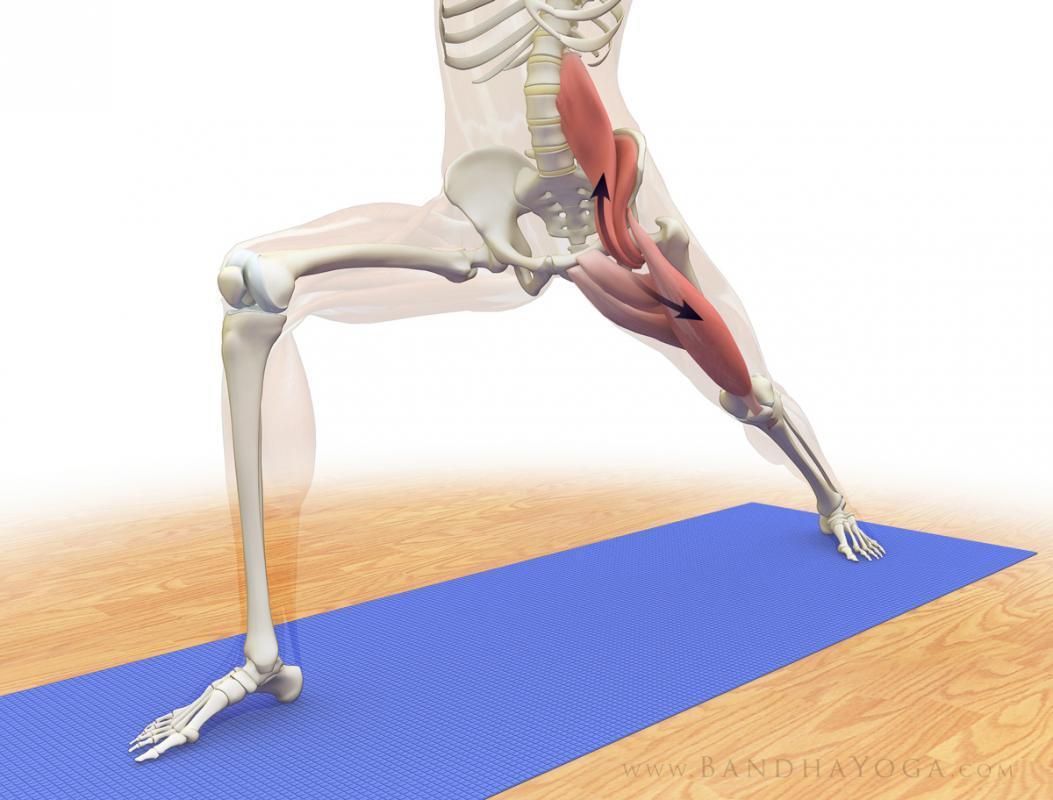 Resultado de imagen para musculo psoas